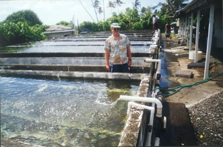 establishing broodstock farms for rearing bangus Project no: 2009/753 will help to establish proper feeding regimes for next season the techniques of cobia broodstock management/larval rearing and.