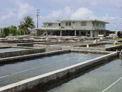 National Aquaculture Center (NAC) in Kosrae, growing giant clams - Courtesy of www.spc.int